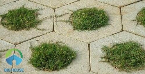 gạch lát sân vườn trồng cỏ 1